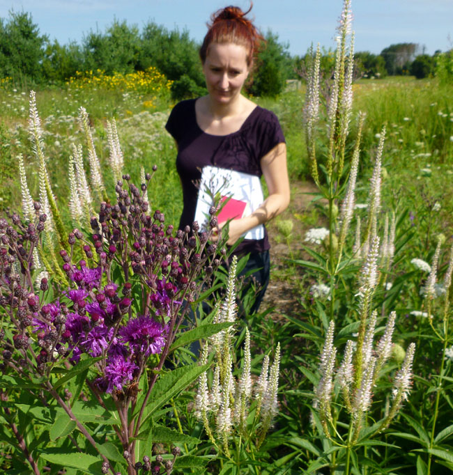 Ironweed and Culver's root