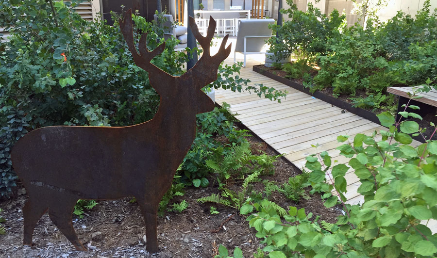 A Corten deer is a permanent resident in the courtyard, nestled amongst lush native planting.