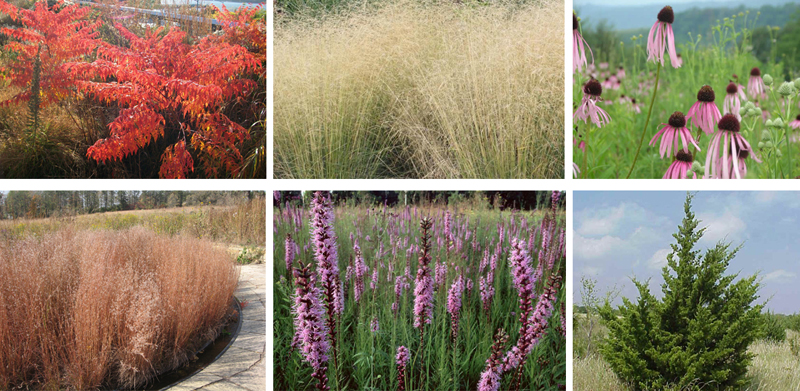 A range of native species characterizes the planting along the River Walk