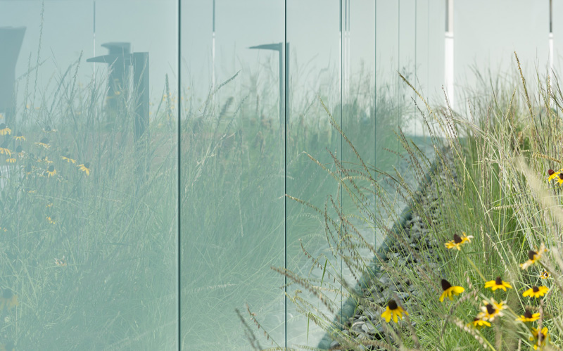 Reflections of the wildflower planting on the frosted glass privacy screen.